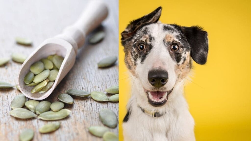 pumpkin seeds for worms in dogs