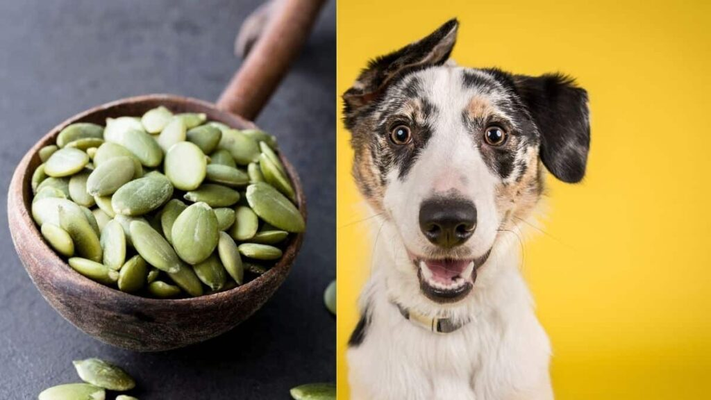 can dogs eat pepitas