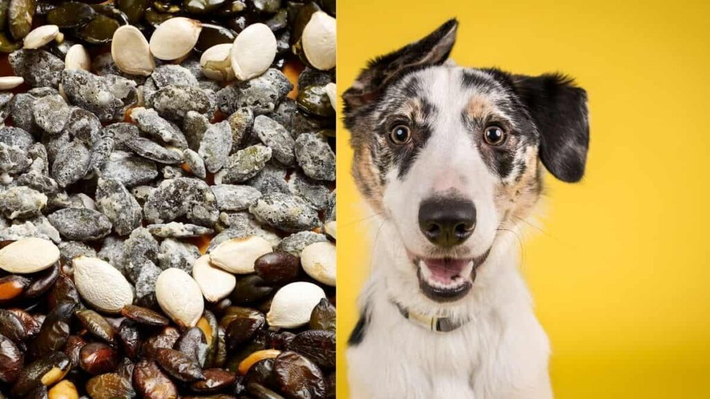 how to prepare pumpkin seeds for dogs