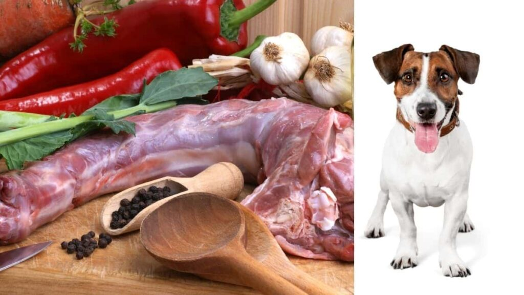 Can dogs eat raw turkey neck