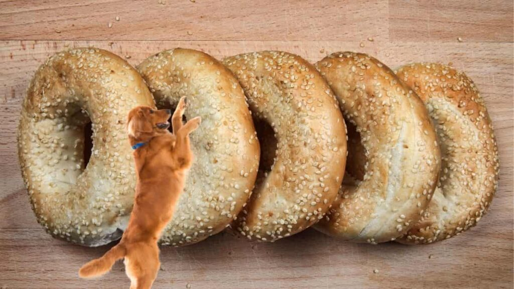 can dogs eat sesame seed bagels