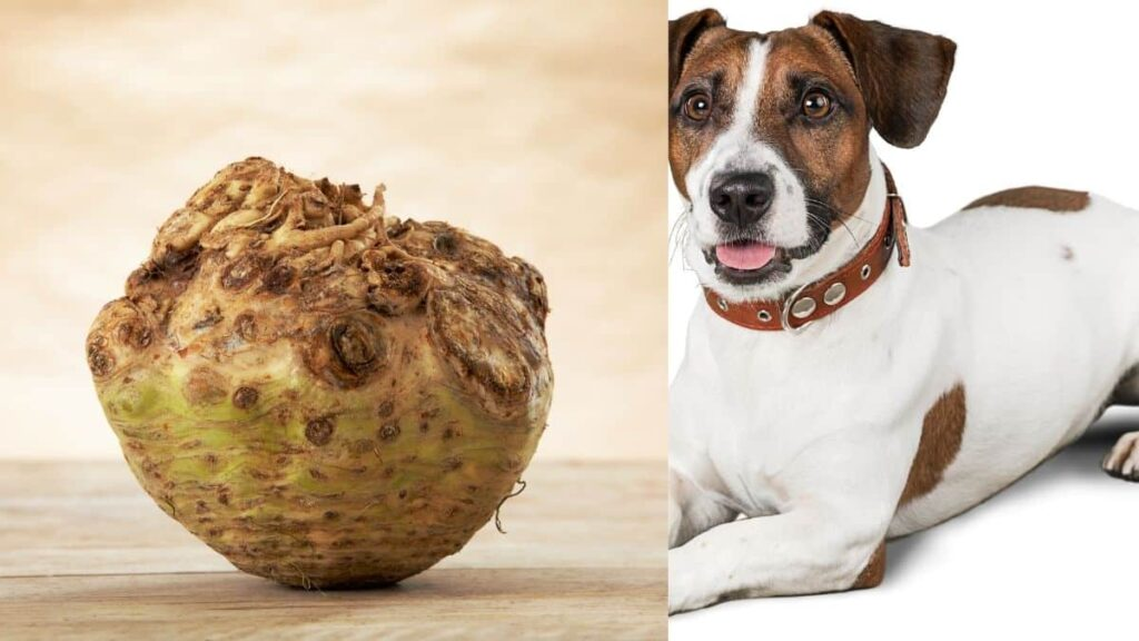can dogs eat celery root
