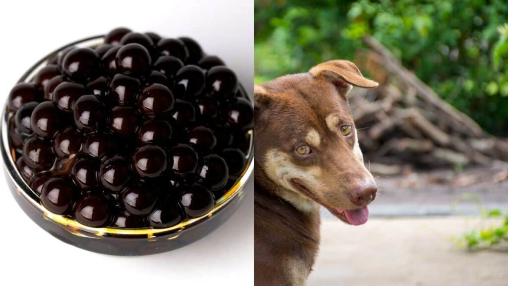 can dogs eat boba